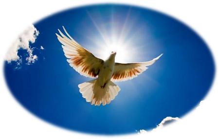 wit duif