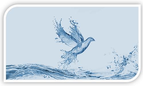 duif en water