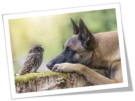 hond en uil