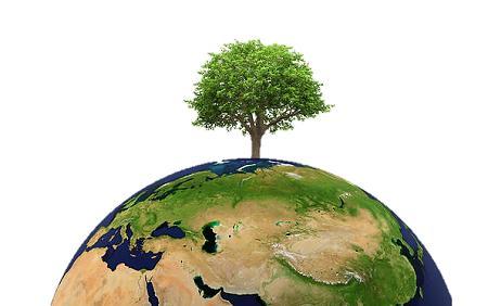 boom aarde