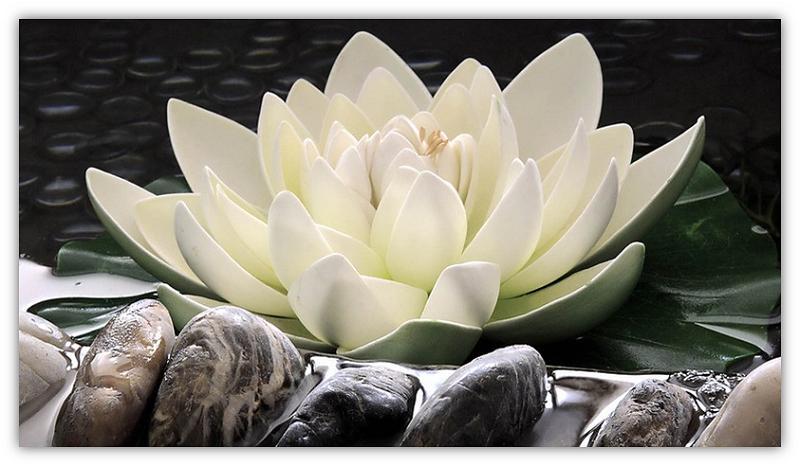 lotusblom