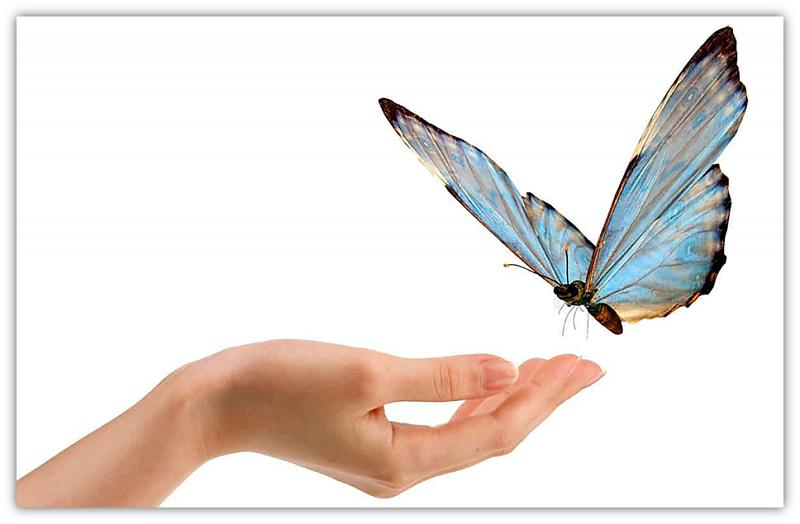 hand vlinder