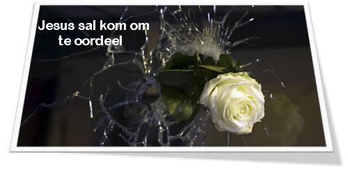 roos gebreekte glas