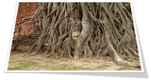 boomwortel beeld