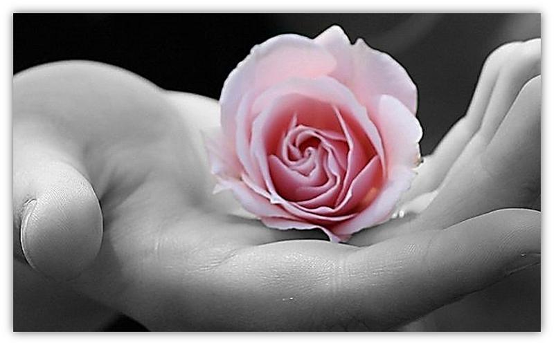hand met roos
