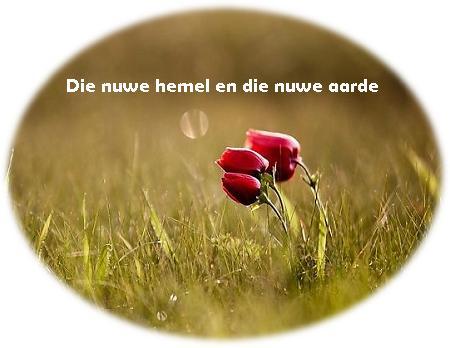 blom in veld