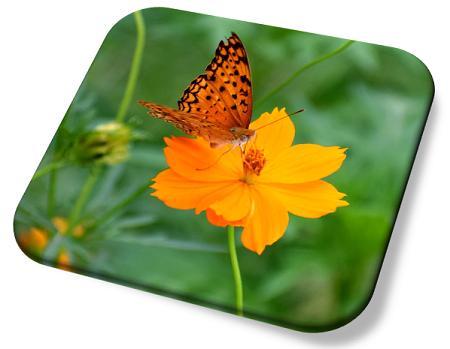 blom en vlinder