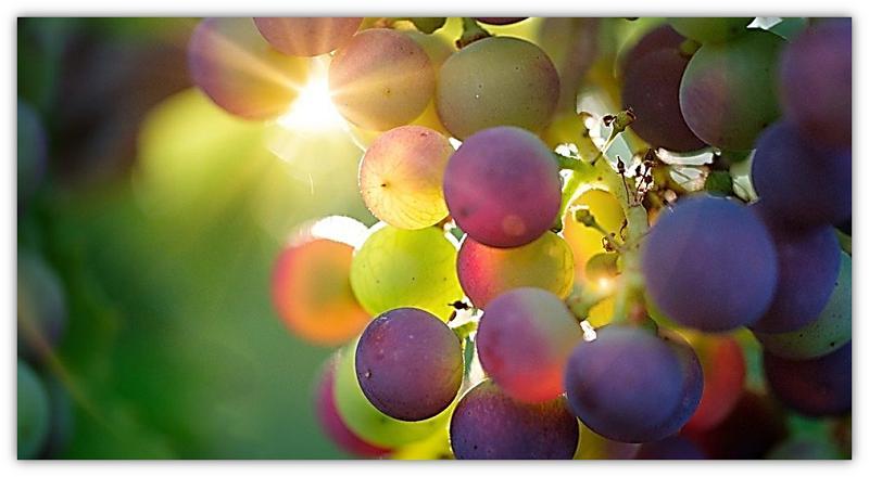 druiwe